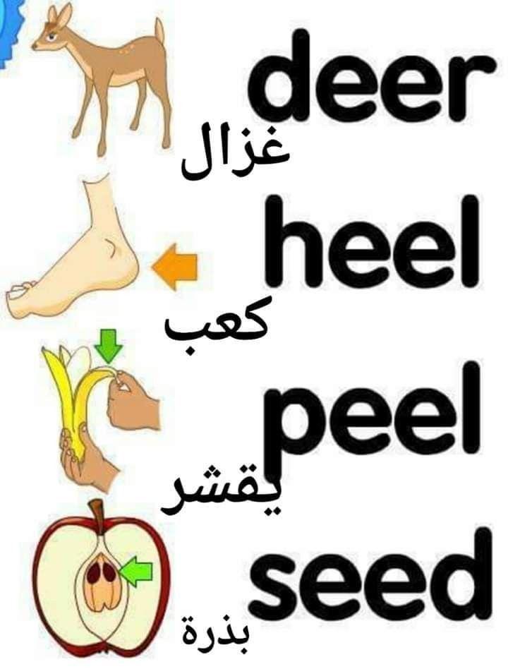 Pin By Zahra On ابراهيم ابراهيم Facebook English Language Learning Grammar English Phrases English Words