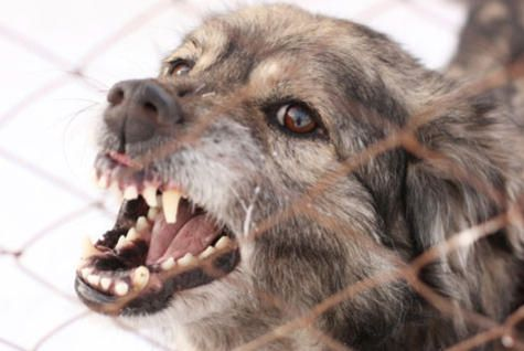 The U.S. Postal Service names its top 30 cities for dog bites, but do you know how to help prevent them in the first place?