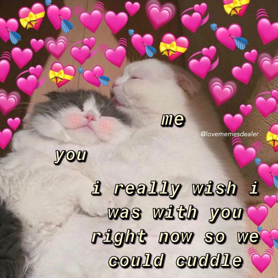 Crush Meme Wholesome Katherine S Wholesome Memes On Instagram Good Morning Hope You All Have A Good Day Cute Love Memes Cute Cat Memes Love Memes