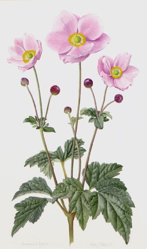 Various Flower Painting Botanical Artwork Botanical Drawings