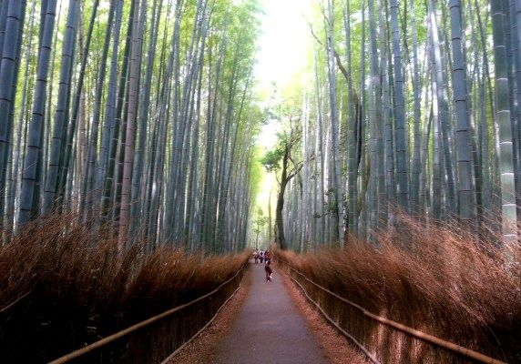 48 Hours in Kyoto, Japan | A Passion and A Passport