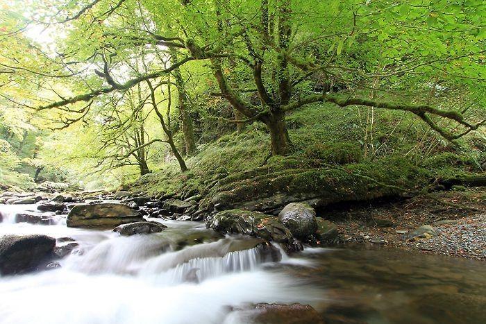 Cours d'eau au début du sentier d'Holzarte. Pyrénées Atlantiques. France.
