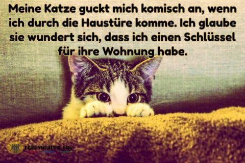 Feuer der Liebe Freundebuch Sprüche #sprüche #lustigesprüche | My ...