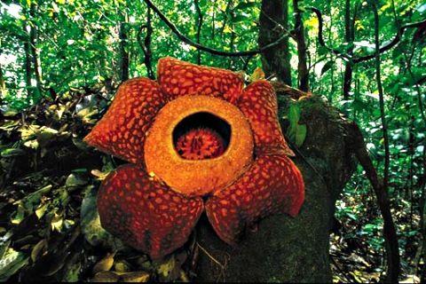 Funny pictures: Rainforest plants, tropical rainforest plants ...