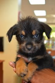 8 9 14 Still Listed Stella Florida Animal Details Puppy