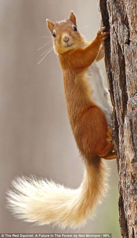 Pin by Eileen Ferguson on I love Squirrels | Pinterest | Squirrel ...