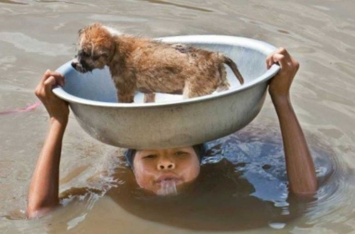 A Young Boy Puts Himself in Danger to Keep His Dog Safe During a Flood... - Pictures That Will Restore Your Faith in Humanity