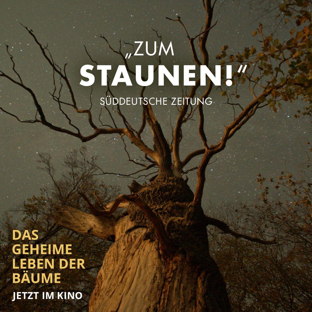 Pin Von Constantin Film Auf Das Geheime Leben Der Baume 2020
