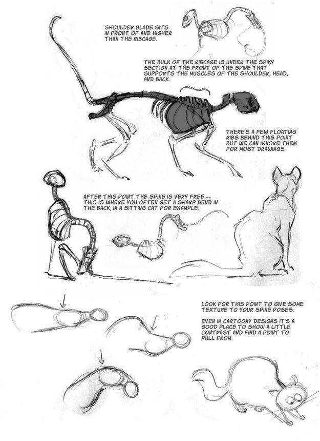 Schön Katze Anatomie Tutorial Bilder - Menschliche Anatomie Bilder ...