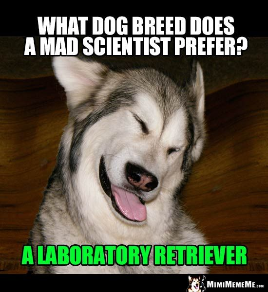 Dog Riddle What Dog Breed Does A Mad Scientist Prefer A