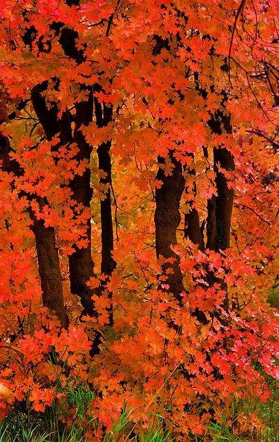 Promontory - final #autumnscenes