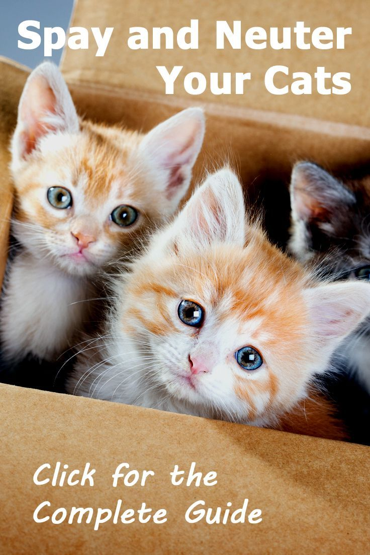 Why You Should Spay Neuter Your Cats Read The Complete Guide Along With Frequently Asked Questions With Images Cat Care Cats Cat Adoption