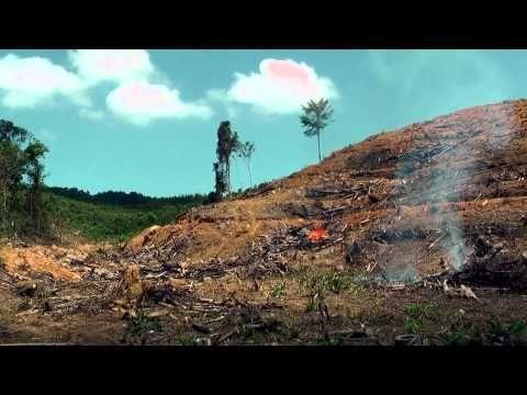 Borneo West Kalimantan A Video Created By Eco Warrior Re Deforestation In Borneo West Kalimantan South Kalimantan Borneo