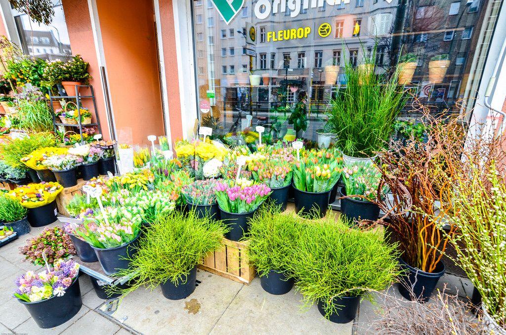 Flower shop Berlin Flowers, Plants, Garden