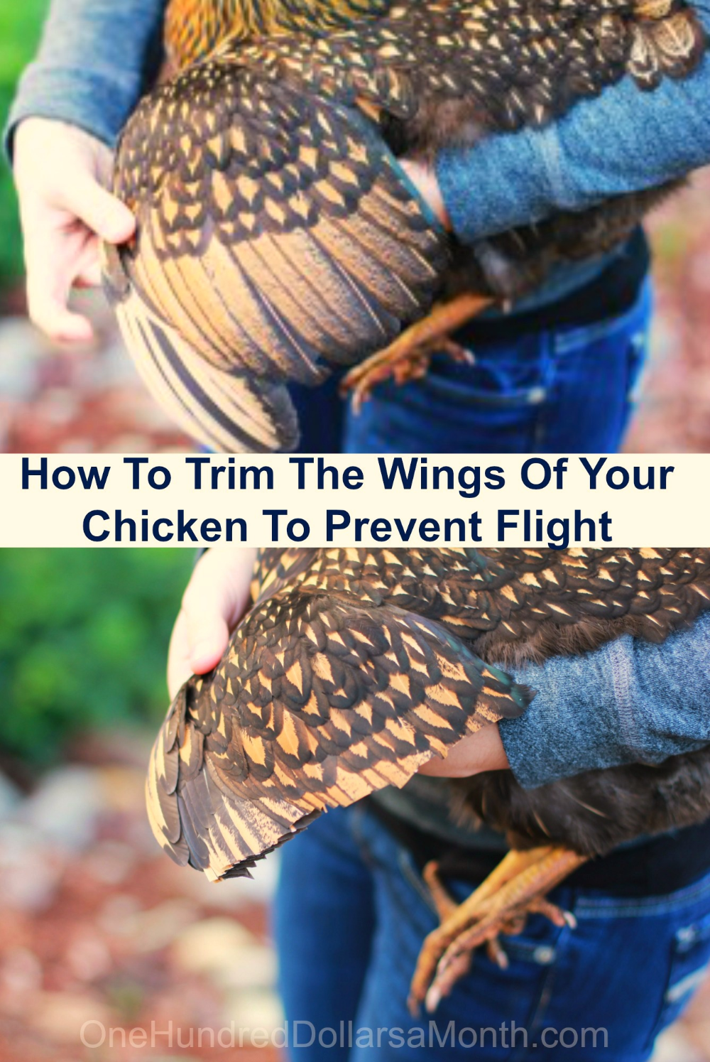 How To Clip Chicken Wings One Hundred Dollars A Month Chicken Garden Chickens Backyard Backyard Chicken Coops