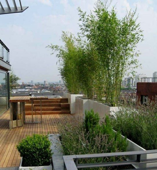 Bambus Pflanzen Dachterrasse Sichtschutz Sichern | Balkongarten ... Bambus Balkon Sichtschutz
