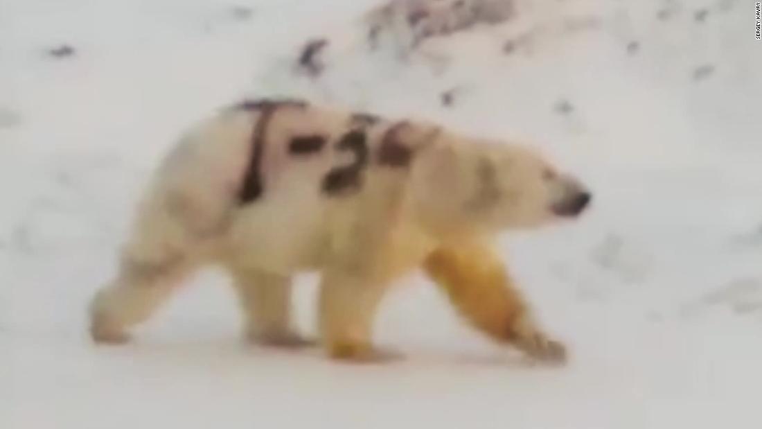 Pin on Furs