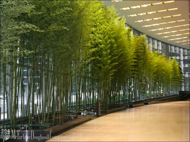 Bamboo Lined Hallway Chicago Arboretums Interior Plants Interior Garden Plants