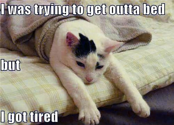 4b69ea6a84636c1600628086975523b1 44 memes that nail what it's like to have fibromyalgia,Chronic Illness Cat Meme