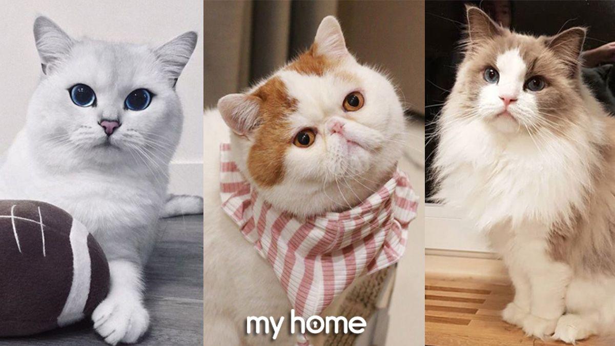 ตามส อง แมวเซเลบ ท โด งด งในโลกออนไลน สาวกทาสแมวห ามพลาด My Home บ าน ระเบ ยง