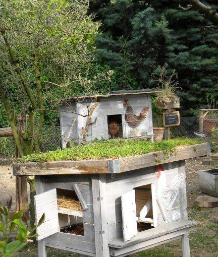 Créer un poulailler avec toit végétalisé serre Pinterest - creer plan de maison