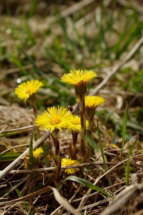 Essbare Pflanzen und essbare Blüten bei Lars Konarek