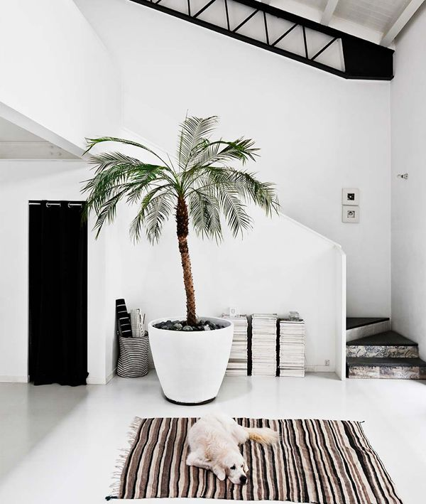 That palm tree! / #maisonmiruloves