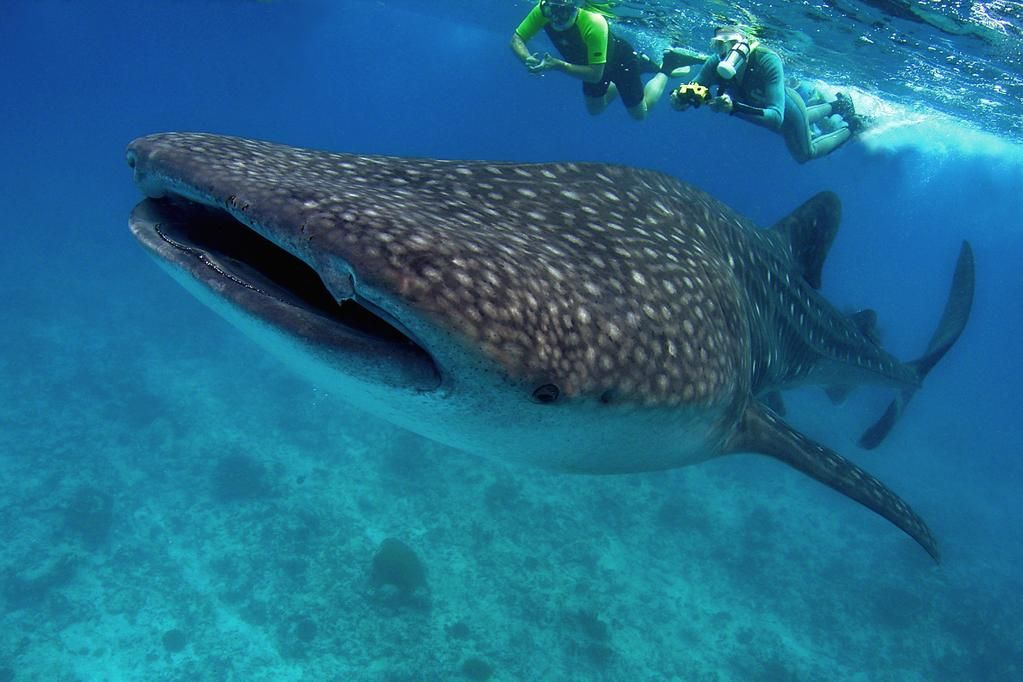 Sub Aqua Dive Center On Diving Center Padi Diving Scuba Diving Courses