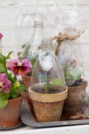 Mini invernadero con botellas de plástico plantas en macetas