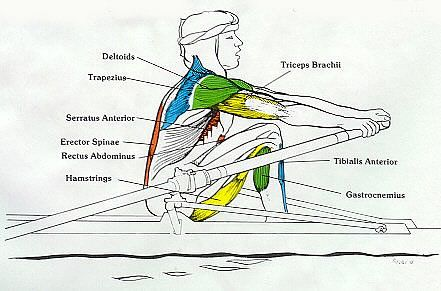 does rowing machine work abs