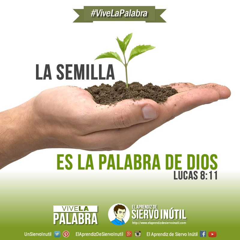 ViveLaPalabra - La semilla es la Palabra de Dios. (Lucas 8:11) | Shabbat  shalom, Herbs, Bible study