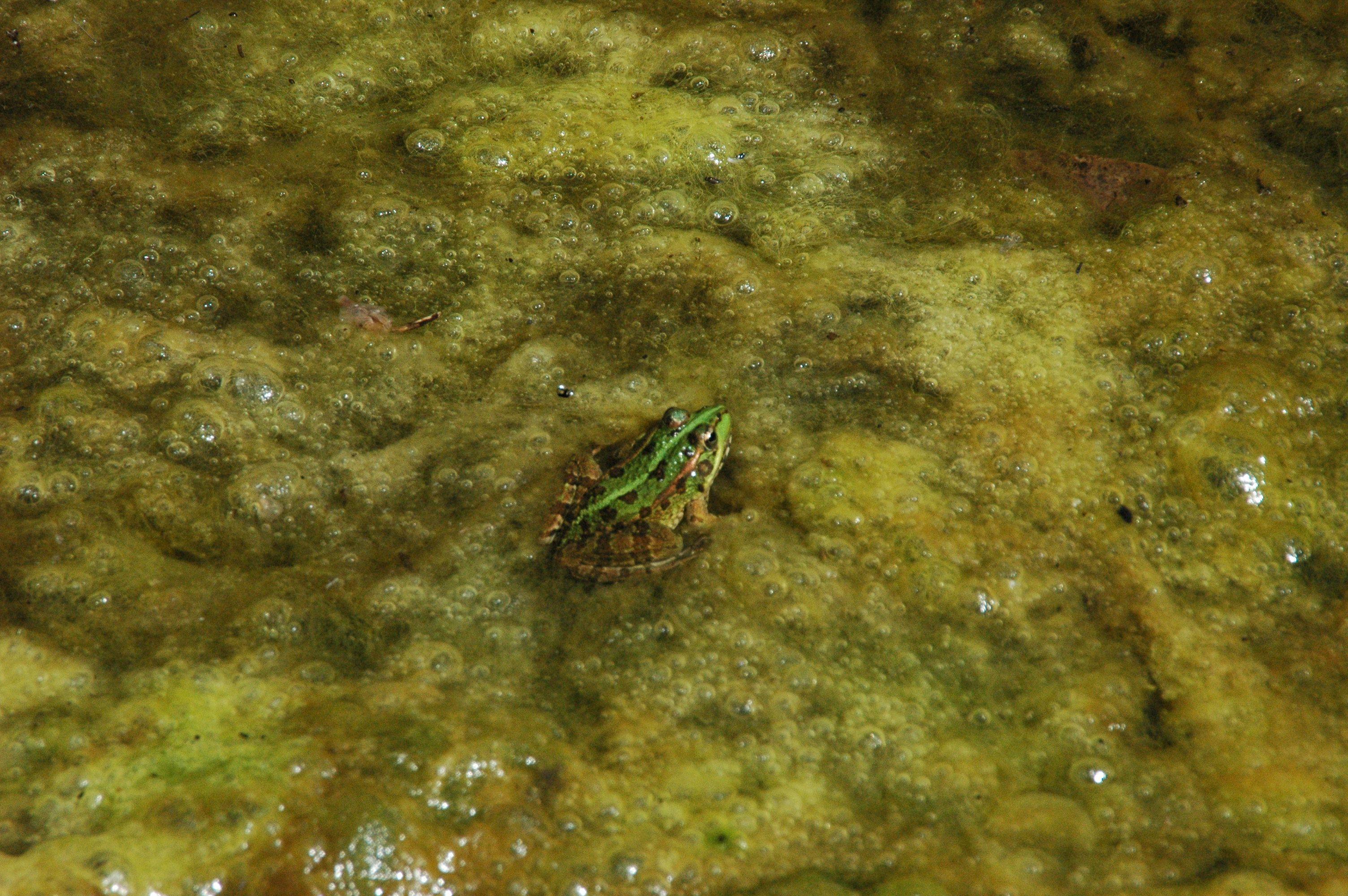 ¿Sabías que todos los #anfibios de la Península Ibérica están en #sierradearacena