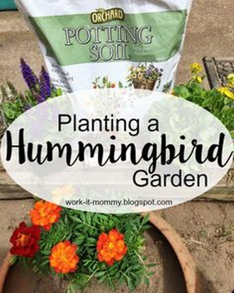 Hummingbird garden ideas hummingbirds also require water - Butterfly and hummingbird garden designs ...