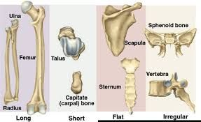 irregular bones