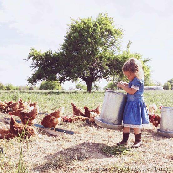Visit a Farm Feeding Chickens, Yonderway Farm