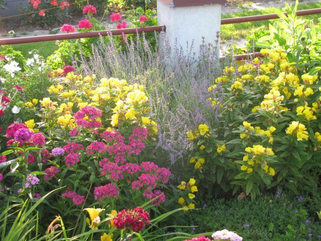Rosliny Odstraszajace Komary Ogrod Otoczenie Budynku Plants
