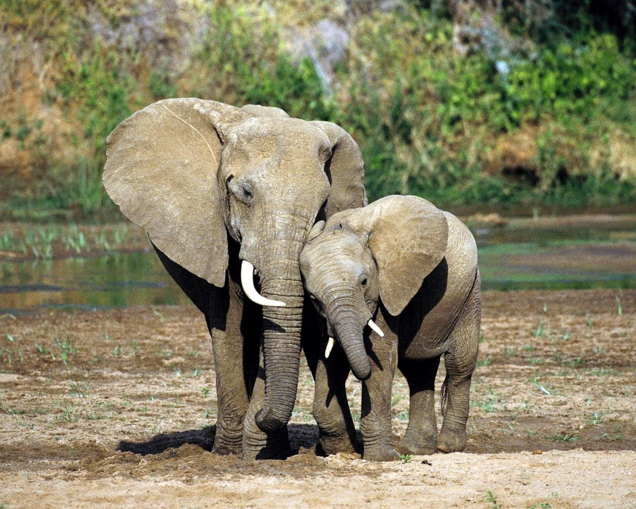 mommy and baby elephants amazon com nursery cute mommy and baby