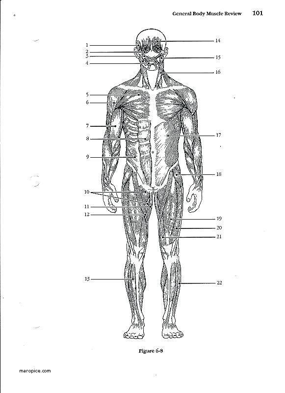 Printable Anatomy Labeling Worksheets 50 Free Human Body ...
