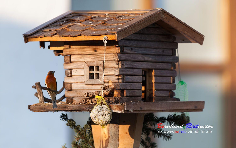 Das Essen hängt noch ein bisschen ab. #rotkehlchen #singvögel #fotografie #photography #fotografia #robin #pettirosso #uccello #bereitvideofilm Das Essen hängt noch ein bisschen ab. #rotkehlchen #singvögel #fotografie #photography #fotografia #robin #pettirosso #uccello #bereitvideofilm www.bereit-videofilm.de https://500px.com/bernhardreitmeier https://www.facebook.com/BEREITVideofilm