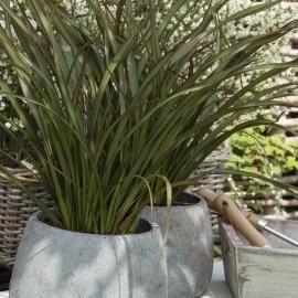 Phormium fiches plantes phormium pinterest plantes gamm vert et vert - Plantes exterieur terrasse ...