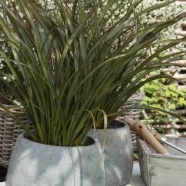 phormium fiches plantes phormium pinterest plantes gamm vert et vert. Black Bedroom Furniture Sets. Home Design Ideas