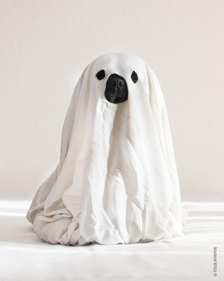 Halloween Pug | Everything Pug | Scary dogs, Pugs, Dog stories