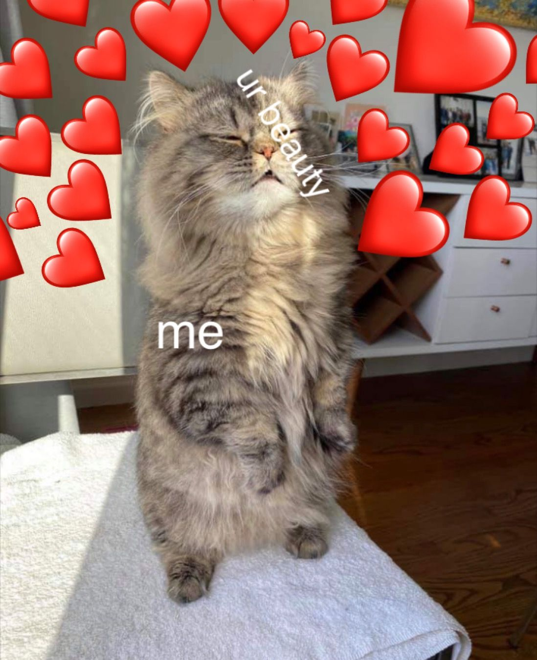 Cat Hearts Meme : hearts, Hearts, Heart, Meme,, Heart,
