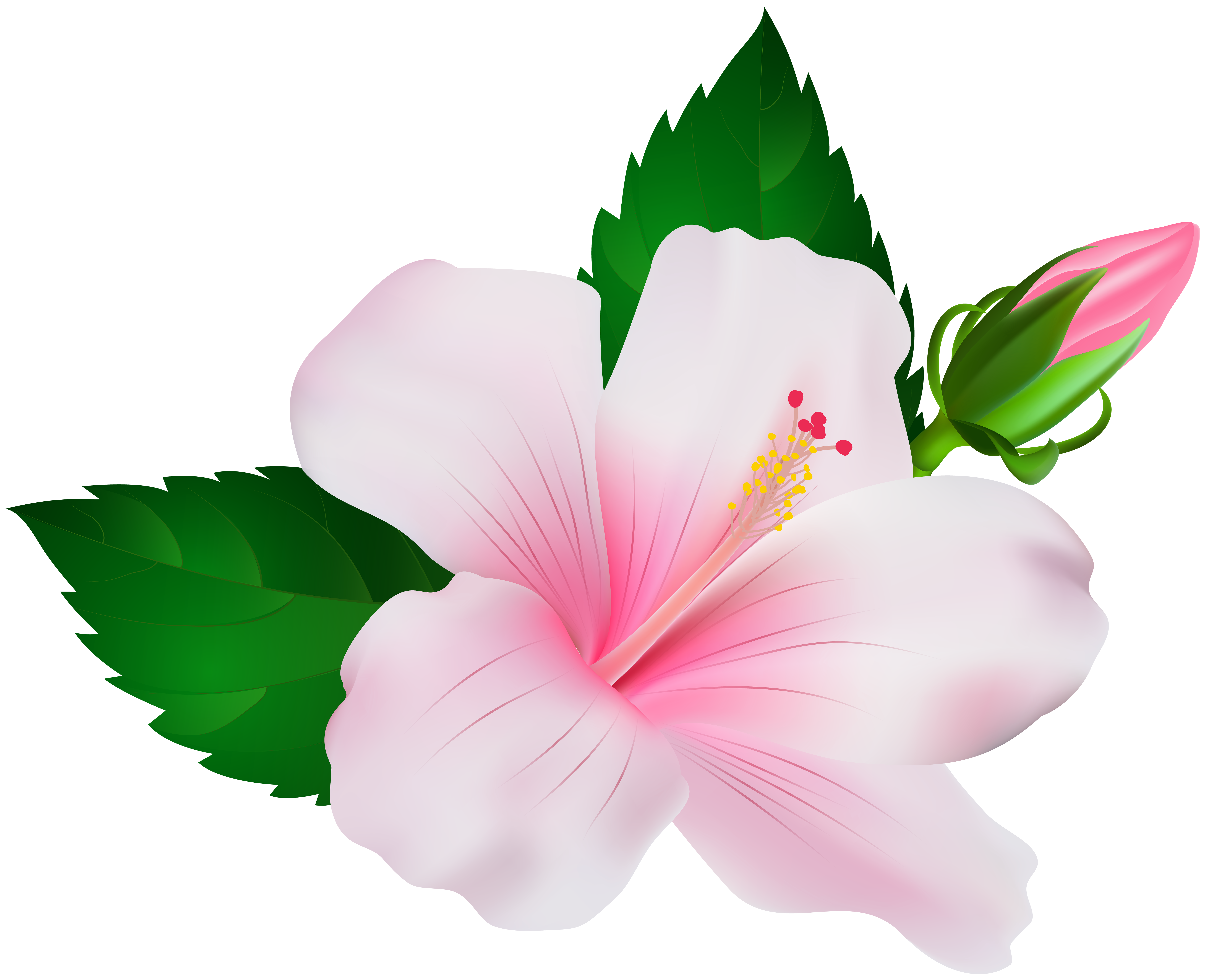 Hibiscus Png Clip Art Image Gallery Yopriceville High Quality Images And Transparent Png Free Clipart Flower Drawing Flower Clipart Flower Art