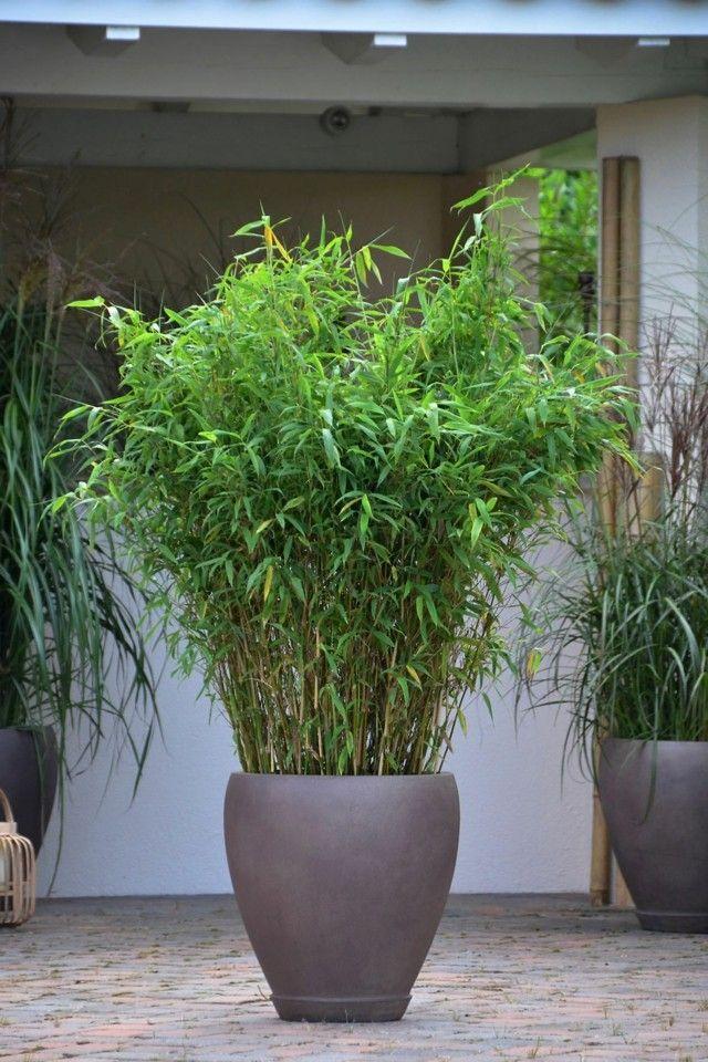 Una maceta grande que sirve para exteriores e interiores for Macetas plantas exterior