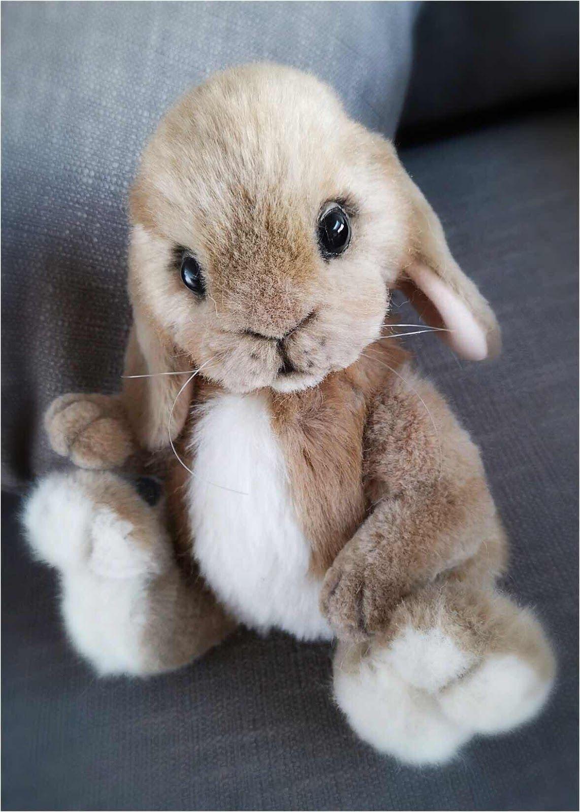 Hazel the Bunny Available for Adoption Bunny paws, Cute