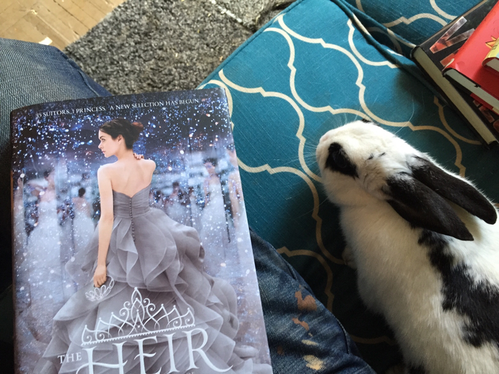 Book Rioter's Bookish Pets (With images) Pets, Cute