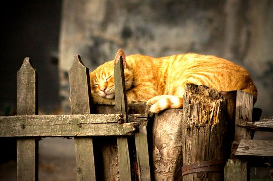 Another long day - http://cutecatshq.com/cats/another-long-day/
