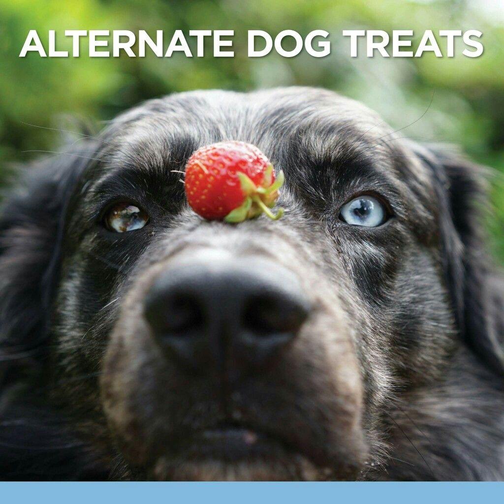 Healthy dog treats Dog treats, Dogs, Pets