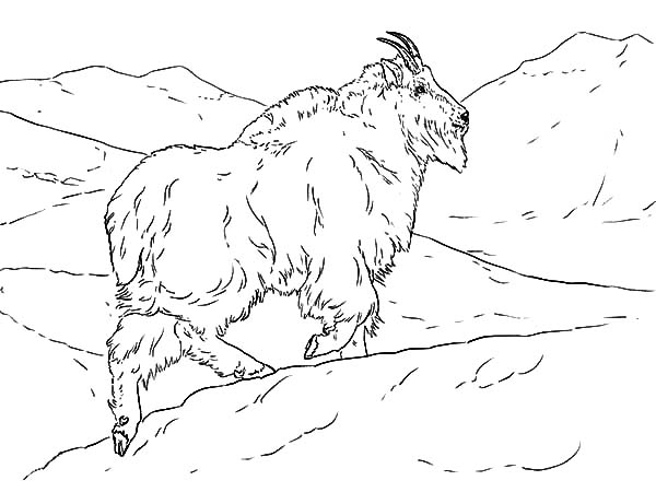 Mountain Goat Coloring Pages Design